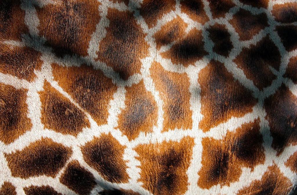 Gli spin-off, ovvero il collo lungo delle giraffe