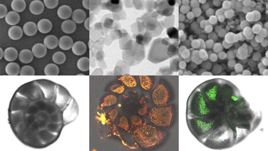 Nanomateriali e rischio ecotossicologico in ambiente marino: su Scientific Reports uno studio di Uniurb